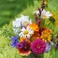 Positive Energy - Appropriate flowers for each zodiac sign