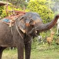 Animals - Elephant Cries After Being Freed
