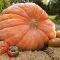 Culinary News - Record! Swiss Man Grows a One-Ton Pumpkin