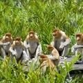 Monkeys - Even Monkeys Use Networking to Rise in the Hierarchy