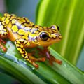 Rebirth - The frog – a symbol of rebirth