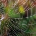 Scientists - Scientists Create a Graphene Spider Web, Capable of Tangling an Airplane