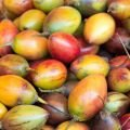 Fruits - Tamarillo