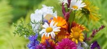 Most dangerous zodiac sign - Appropriate flowers for each zodiac sign