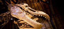 Pictures of the Giant Human Bones Discovered in Peru - Angola was a dinosaur nursery