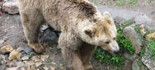 Dancing Bear Park in Belitsa gets other three bears