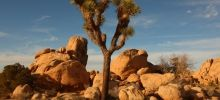 National Parks -  Joshua Tree National Park