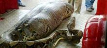 Unrevealed Mysteries India - Indian Man Sleeping in the Street Swallowed by a Python