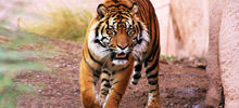 How Many People Disappear Each Year Without a Trace - Cataclysms and catastrophes in the year of the Tiger
