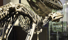 Latest discoveries from the Dinosaur Era