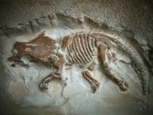 Archaeologists Dig Up the Remains of Triple-Horned Dinosaur - Wendiceratops