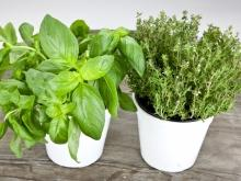 Eight Gifts of Nature We Can Grow in our Kitchen
