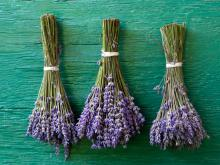 Folk Medicine with Lavender
