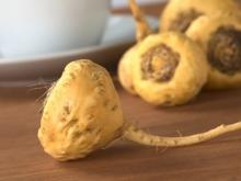 Maca - One of the Lost Crops of the Incas