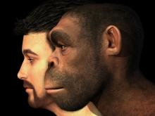 The Genome of the Legendary Homo Heidelbergensis has Been Reconstructed