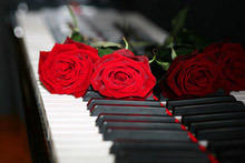 What Does the Red Rose Symbolize?