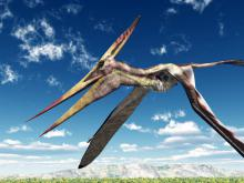 Fossilized Pterosaur Eggs Discovered