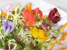How to Season Dishes with Nasturtium