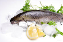 The Wonderful Benefits of Fish to your Health