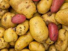 Cooking Potatoes and Potato Varieties