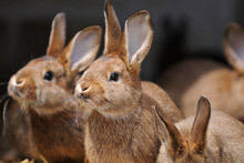 Feng Shui Horoscope 2014 for the Rabbit