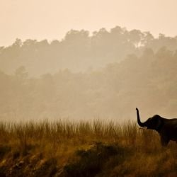Corbett -  Corbett National Park
