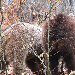 Bohemia - Dancing Bears Park in Belitsa