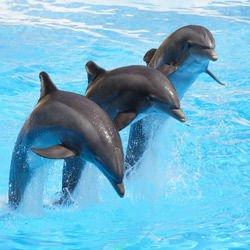 How Much Does a Dolphin Weigh?