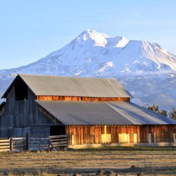 Glen Fiddich - Mount Shasta