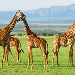 Medieval castles - Ngorongoro Crater Reserve