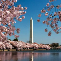 Washington Monument -  Washington Monument