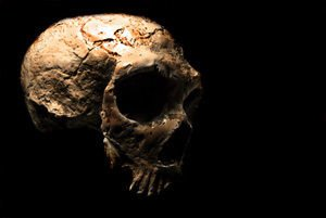 Skull disproved the theory of African ancestors