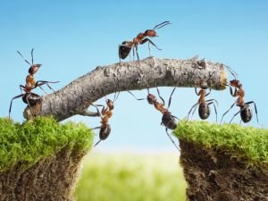 What Does it Mean if you Have a Lot of Ants in the Home?