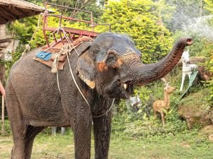 Elephant Cries After Being Freed