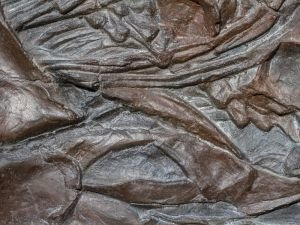 Uncovered Remains of a 560-Million-Year-Old Muscle