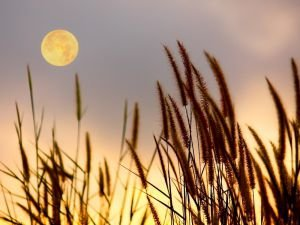 Full Moon in Sagittarius - What to Expect Today