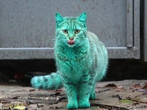Dazzling Green Cat Runs Around Varna for a Second Year