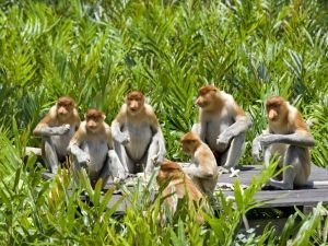 Even Monkeys Use Networking to Rise in the Hierarchy