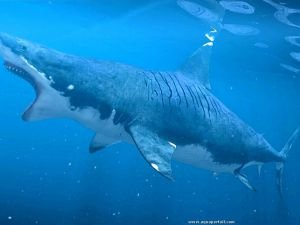 Does the Bloodthirsty Megalodon Shark Swim Free?