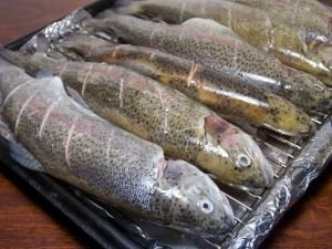 Grilling Trout