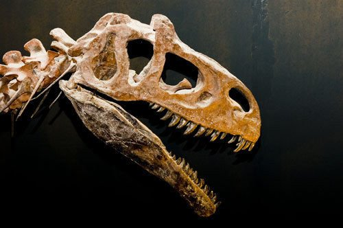 Dinosaur Myths you Probably Believe
