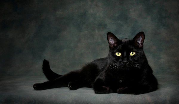 The cat and the darkness