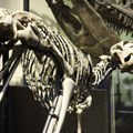 Paleontologists - Latest discoveries from the Dinosaur Era