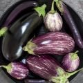 Eat Eggplants to Lose Weight and Fight Cellulite!