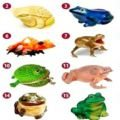 Feng Shui - Pick a Frog and Find out the Quickest Way to Get Rich