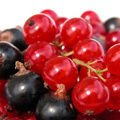 Six Health Benefits of Blackcurrants