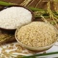 Some History of Rice