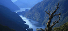 Fiordland National Park -  Fiordland National Park