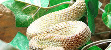Venomous Snakes in China - Interesting Facts about Snakes