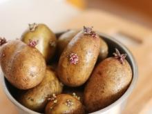 Why Sprouted Garlic and Potatoes are Unhealthy